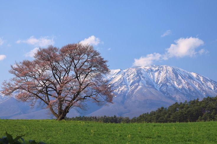 Árvore solitária