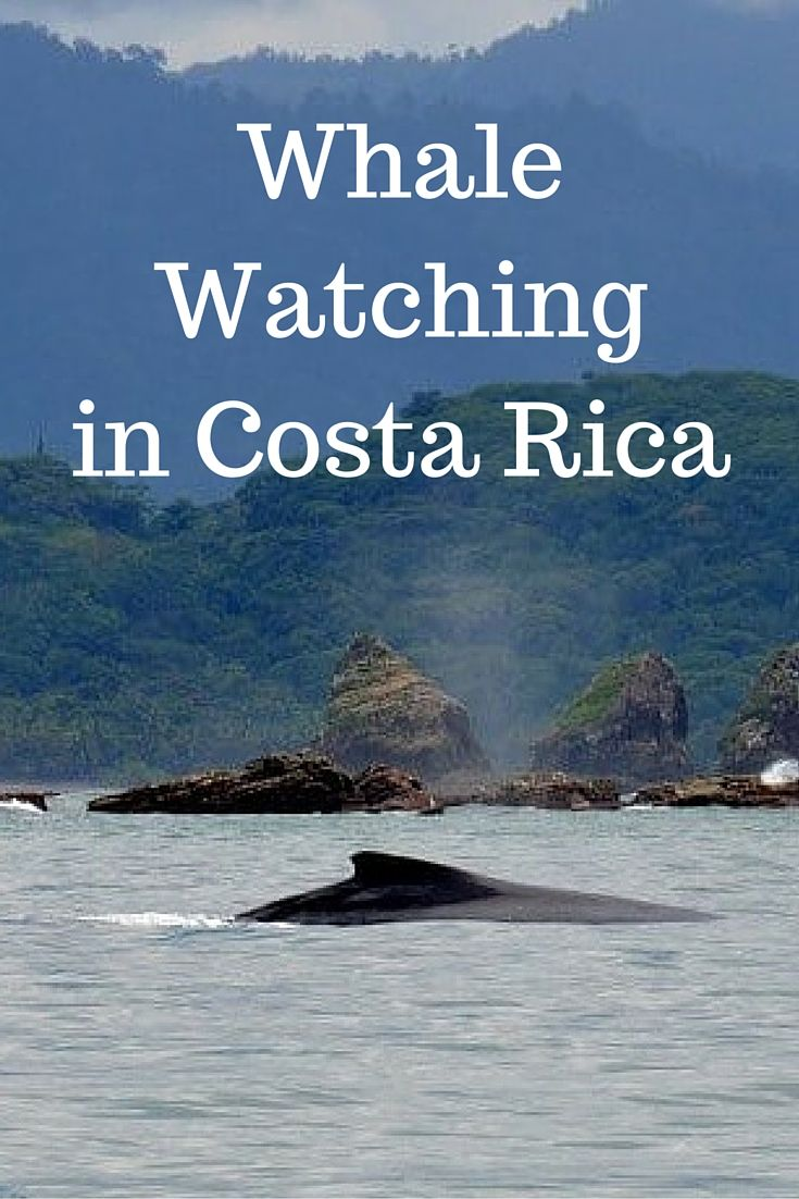 Whale Watching in Costa Rica - Best Times of Year and Where to Go