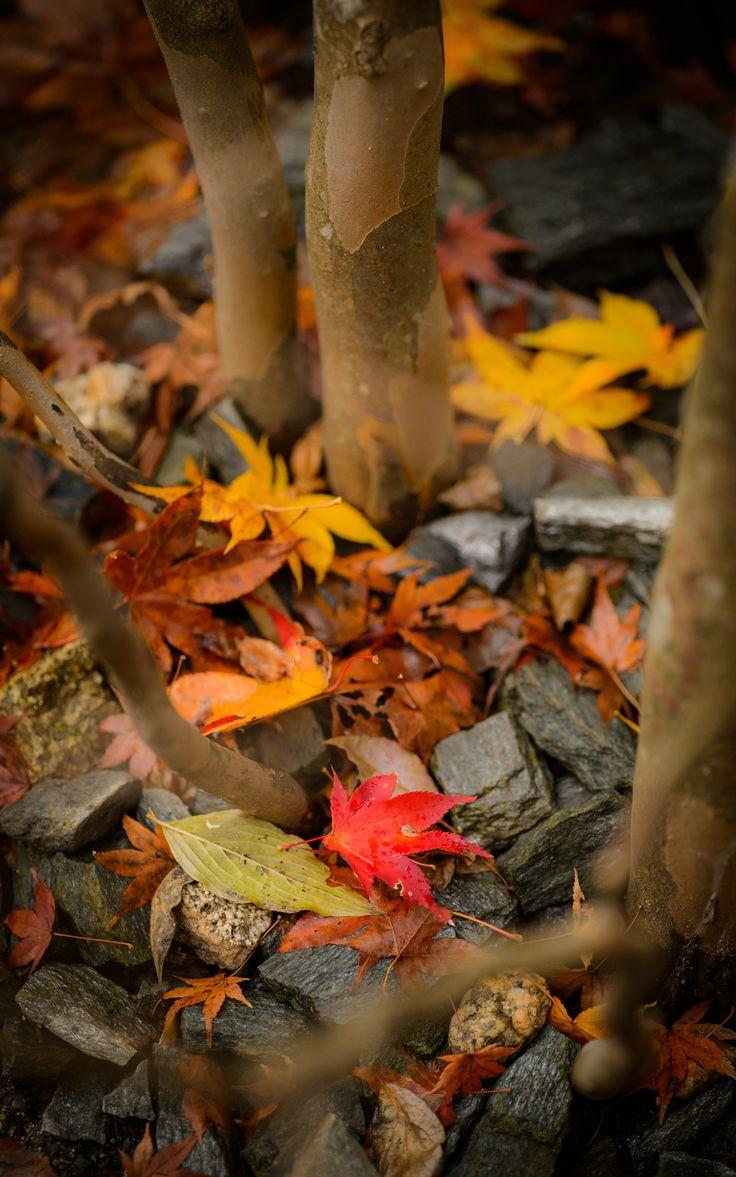 370 best autumn leaves images on pinterest autumn fall autumn