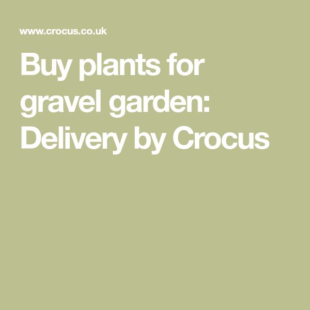Buy plants for gravel garden: Delivery by Crocus