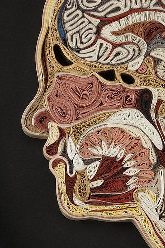 Anatomical cross sections from paper