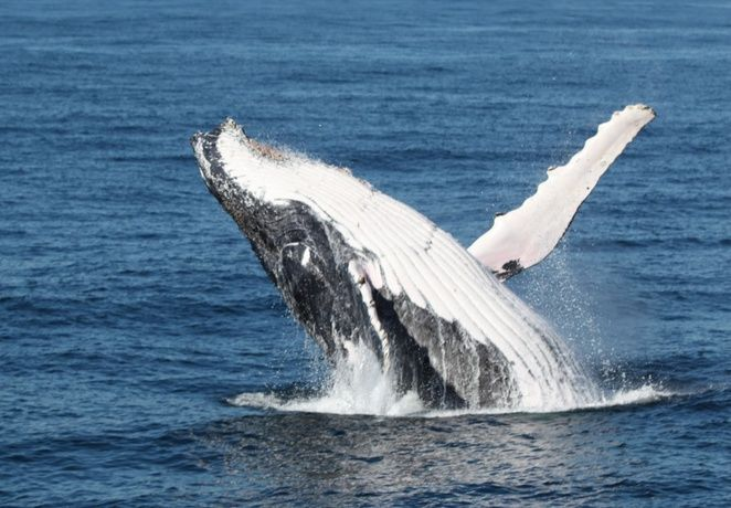 Moonshadow Whale Watch Cruise #Port Stephens