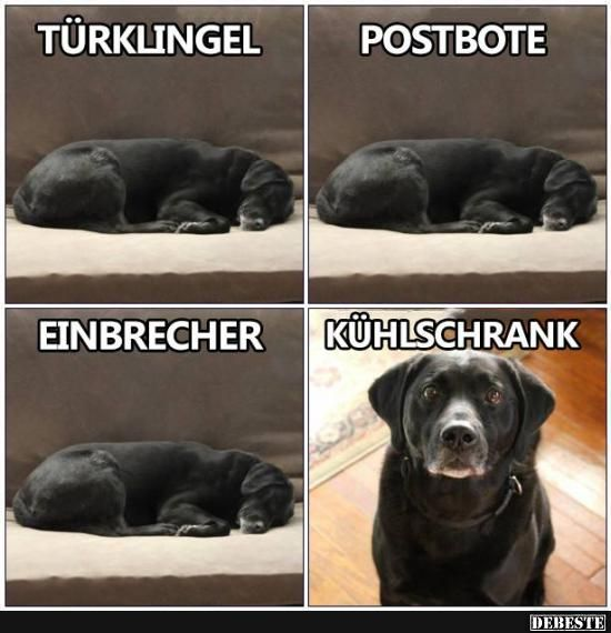 Türklingel / Postbote / Einbrecher / Kühlschrank.. | Lustige Bilder, Sprüche, Witze, echt lustig