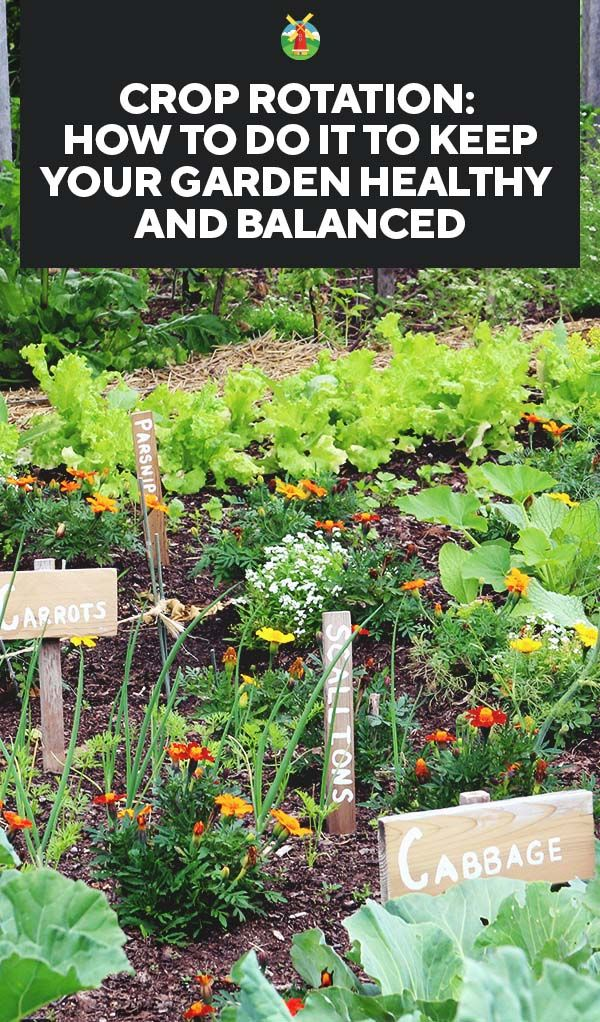 Crop Rotation How to Do It to Keep Your Garden Healthy