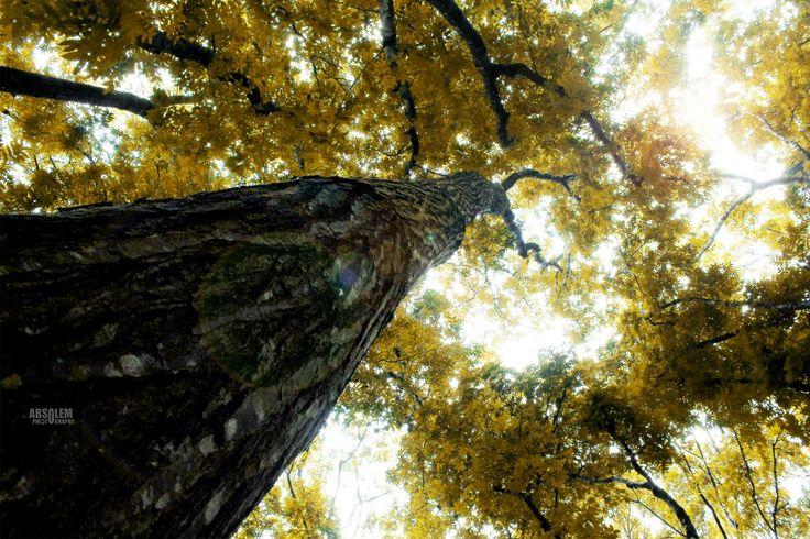 Pohon sumber kehidupan...tree