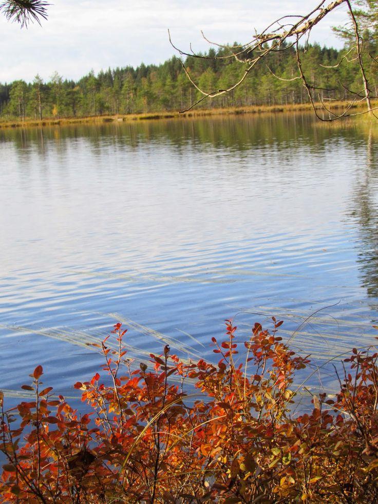 Saari-Soljanen. Seitseminen National Park.