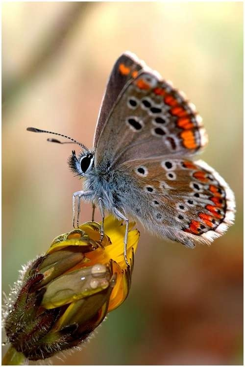 The symbiotic relationships in Nature truly represent harmony and balance