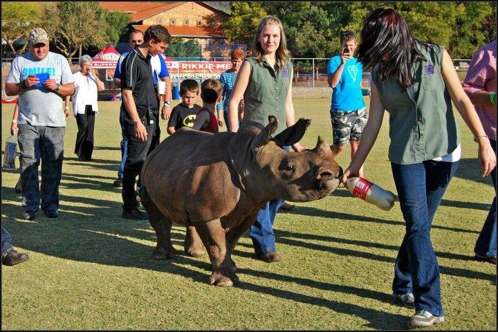 Asha the Rhino 02 720x480 The Story Of Asha The Rhino