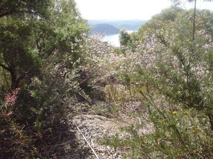 bush view....Broken Bay
