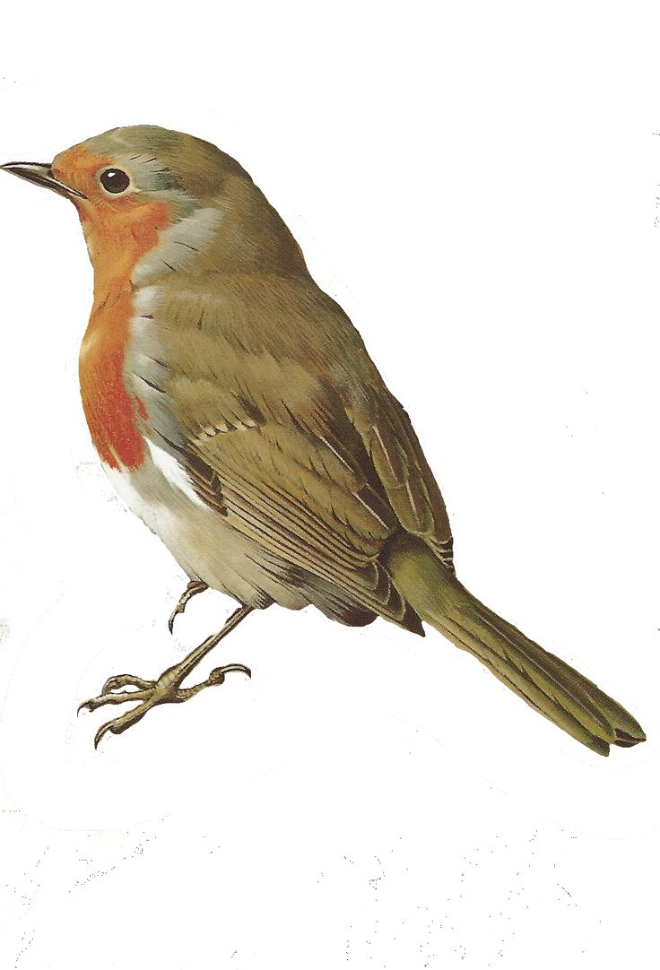 Robin (free image from painting)