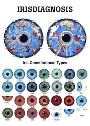 iridology chart | Free Iridology Charts