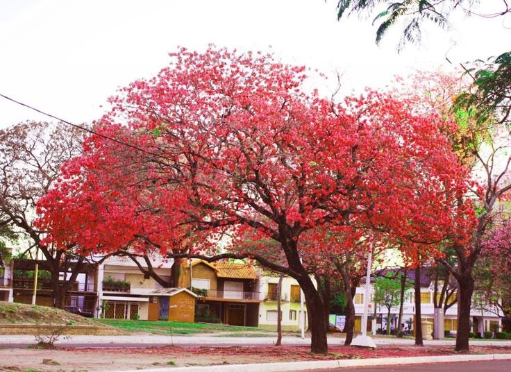 Jacarandá. Más info en www.facebook.com/viajaportupais