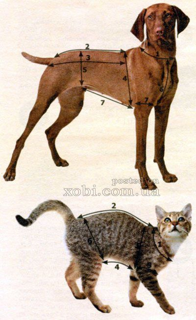 How to take measurements with the dogs and cats