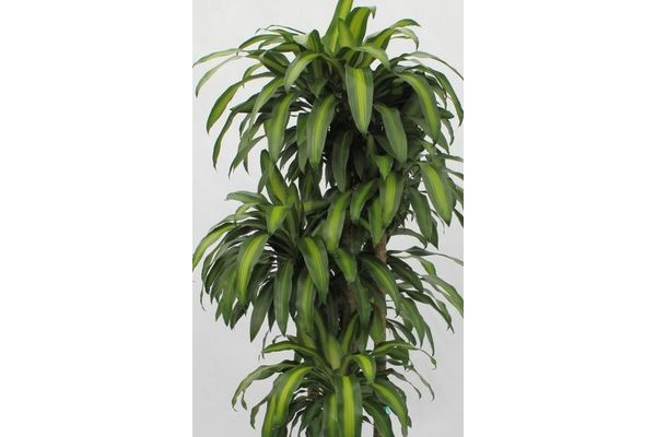 1000 Images About Indoor Plants For The Nt On Pinterest 400 x 300