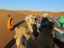 ma-kamelen sahara - Fair-2