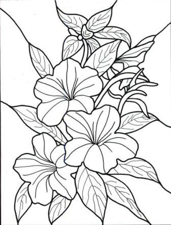 Hibiscus Flower Hawaiin Hibiscus Flower Coloring Page Flower