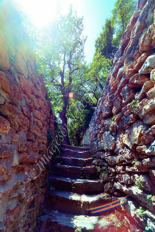 stairs in Maze Garden, Maßstab im Labyrinth Garten, escaliers dans Le Jardin Labyrinthe, scara in Gradina Labirint  www.imagesoundexpert.com