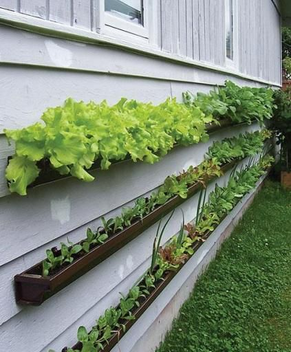 Use rain gutters to plant a vertical salad garden. The article's author planted various lettuces, radishes, beets, Swiss chard and turnips. Other articles suggested short varieties of carrots as well.