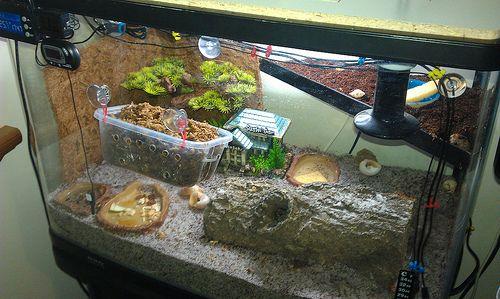 Hermit Crab Paradise » Forums » View topic - rawbies crabitat