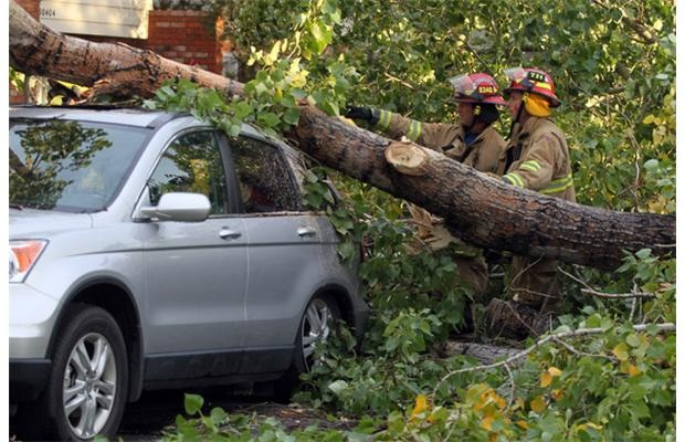 High winds batter Calgary, leave downed trees in wake (click through for more photos and share yours!)