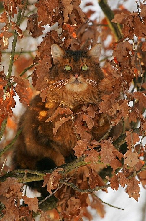 Beautiful cat in the fall - looks like she was made for it.