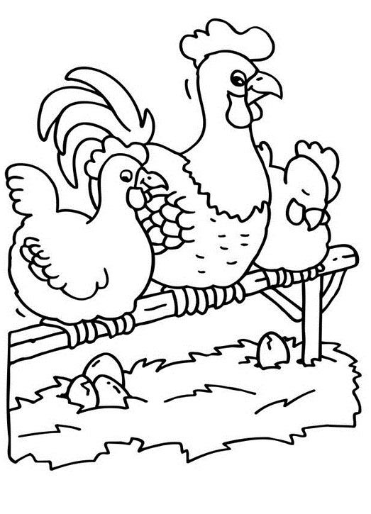 chicken coloring pages for preschoolers - photo#39