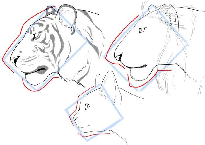体格や顔の違いをおさえよう! ネコ科の描き分け方講座|イラストの描き方  横顔の描き方    How To Draw Cats Big And Small: Face and Frame Differences | Illustration Tutorial  Face Profile