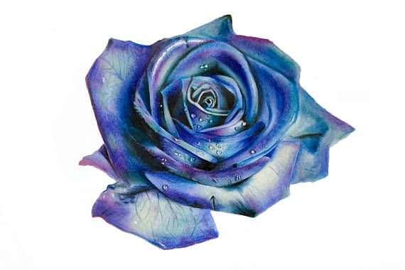 Original Blue Green And Purple Rose Drawing Wall Art Etsy In 2020 Blue Flower Tattoos Rose Drawing Blue Rose Tattoos