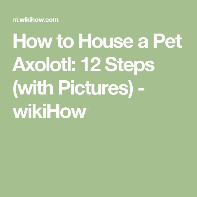 How to House a Pet Axolotl: 12 Steps (with Pictures) - wikiHow