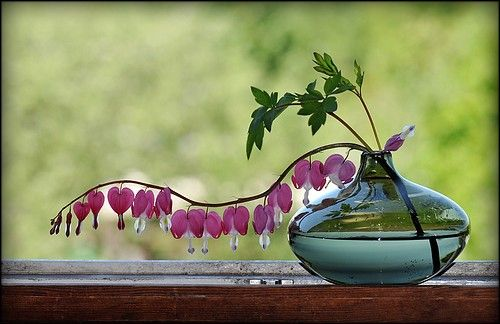 What a great idea for bleeding hearts, I made one of these for a neighbor very simple but eleglant.