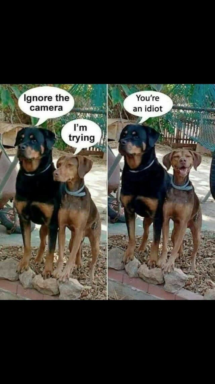 best dogs images on pinterest funny pics funny dogs and funny