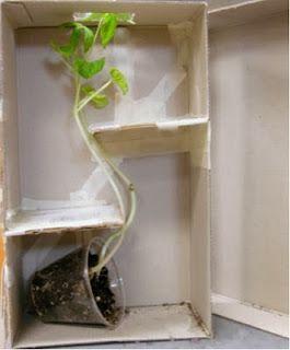 Actividades para Educación Infantil: EXPERIMENTO: mis plantas se mueven