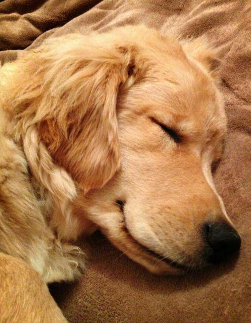 How much does a healthy Labrador Retriever Sleep?.click