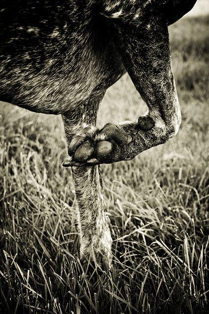 By Anita Peeples.