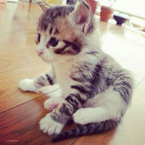 Awww.. Look At The Patterns On The Fur And Its Eyes Its Adorable.....!!! :d