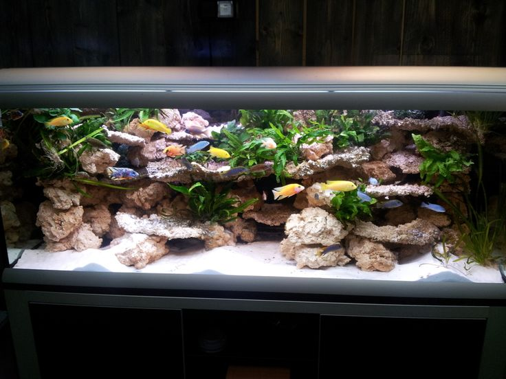 Futur lancement d 39 un bac 400l malawi aquarium for Aquarium log decoration