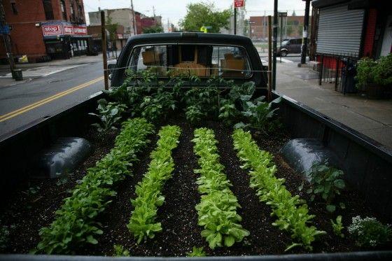 TRUCK FARM & agriculture urbaine