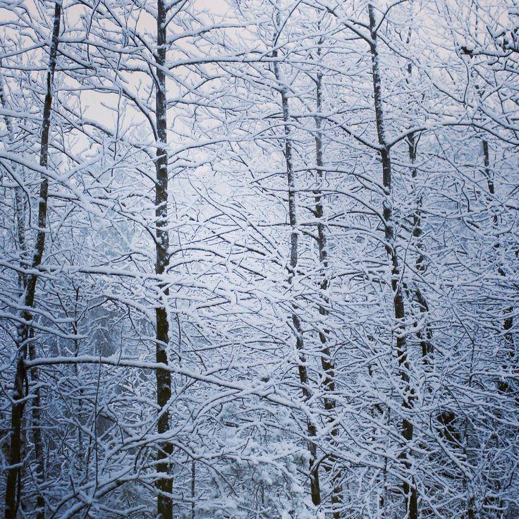 Bosque blanco
