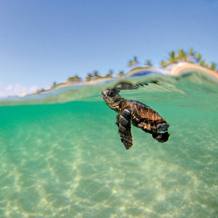 189 Best Images About Sea Life On Pinterest Swim Beluga