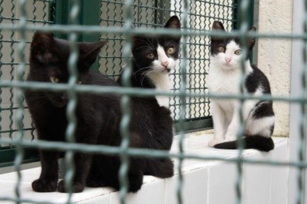 Atraso em licitação deixou gatos sem comida no Centro de Controle de Zoonoses de SP