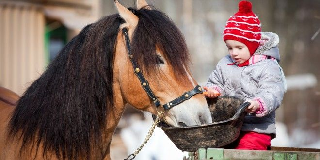 How do I treat Laminitis in my horse with essential oils? - Essential Health