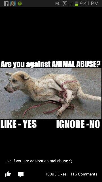 I'm Completely Against Animal Abuse