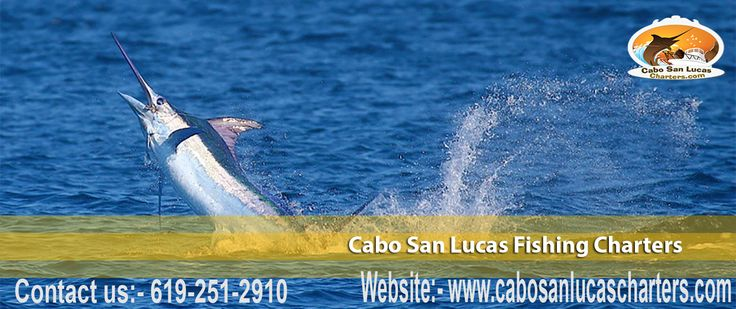 Cabo San Lucas fishing Charters presides as one of the top sport fishing charter company in Cabo San Lucas, Mexico. We are presenting you the top boats and Yachts along with their crews to provide the best charter company in los Cabos Sport fishing since 2000.
