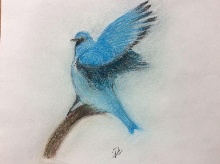 Blauwe Vogel  Gib