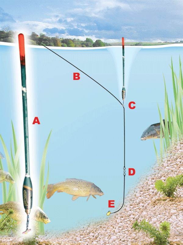 beginners guide to carp fishing