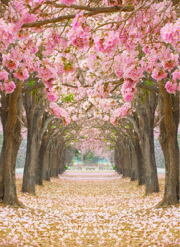 Papel mural de rbol con hojas rosadas primavera for Papeles murales con diseno de paisajes