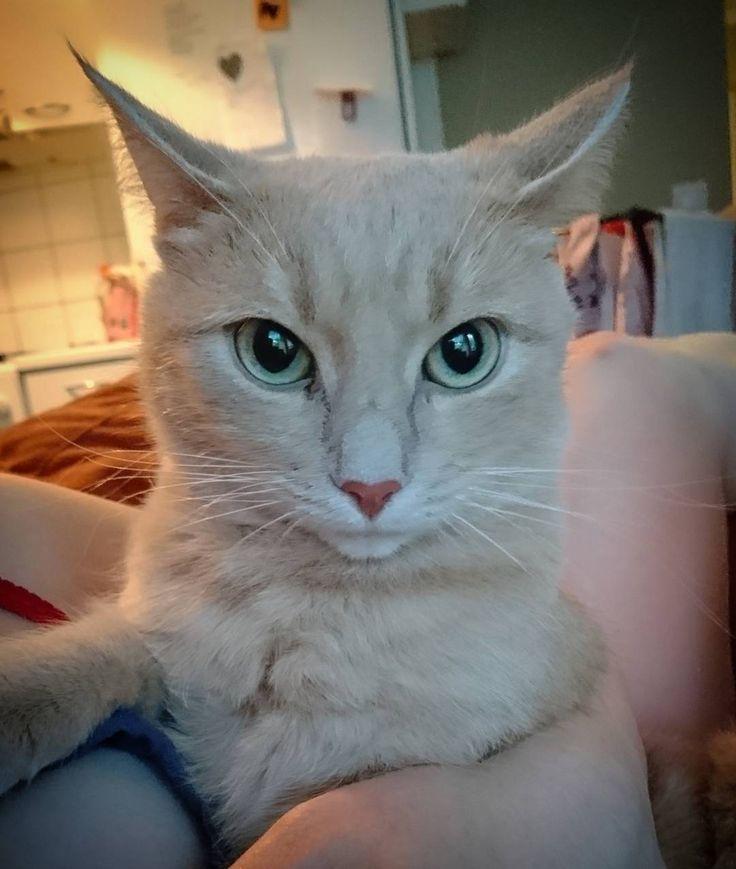 Muka_äreä #kissa.