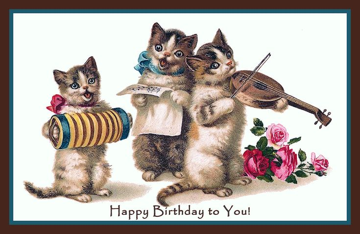 funny birthday cat pictures for women - Google Search