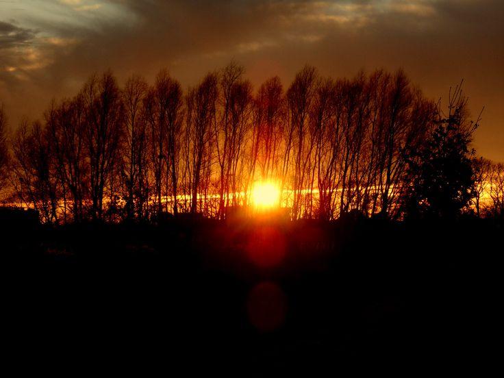 Natuur - Foto : Moric van der Meer