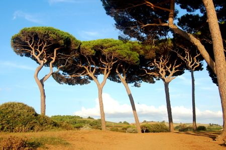 Beautiful trees on the beach of Populonia – Tuscany